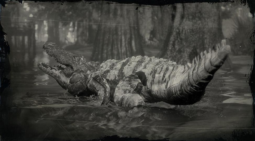 Legendary Bull Gator